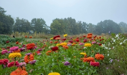A photo of flowers at Dartmouth's Organic Farm