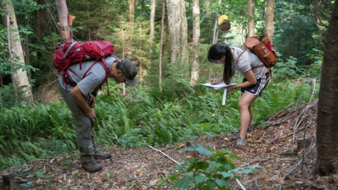 Reo and Cheng inspect vegetation
