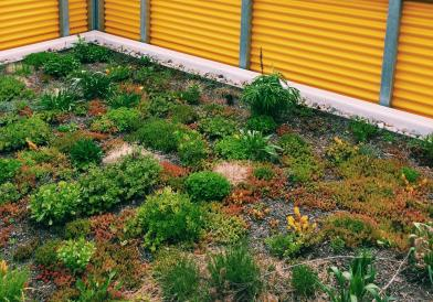 Green roof AVA gallery workshop