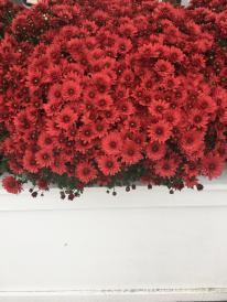 Hanover Flowers