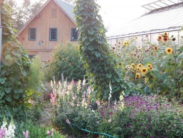 OFarm Garden