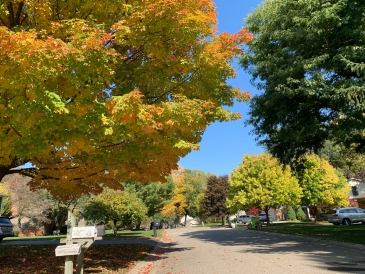 Michigan Trees Changing Color in Fall