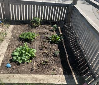 Simons Small Garden