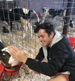 SImon and a Cow