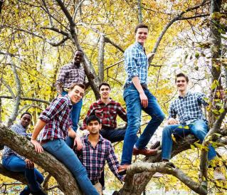 bros in trees