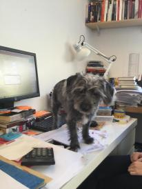 dog on desk