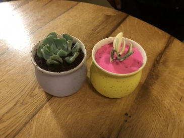 The purple-potted plant is my friend Rudy's, while the cacti in the yellow pot is mine!