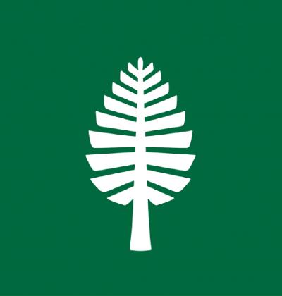 D-Pine placeholder
