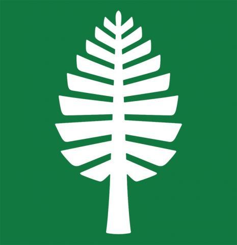 white pine on green aka Amy