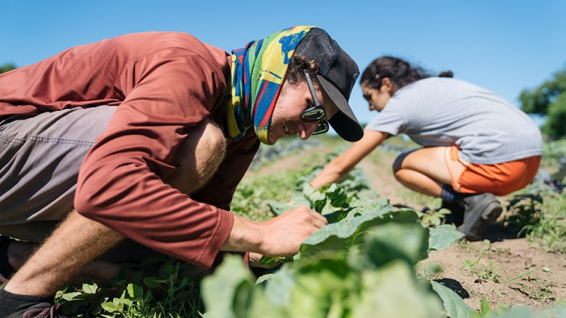 Ralf Carestia '18 and Gillian D'Acierno '18 work on a row of cabbages at the Organic Farm.