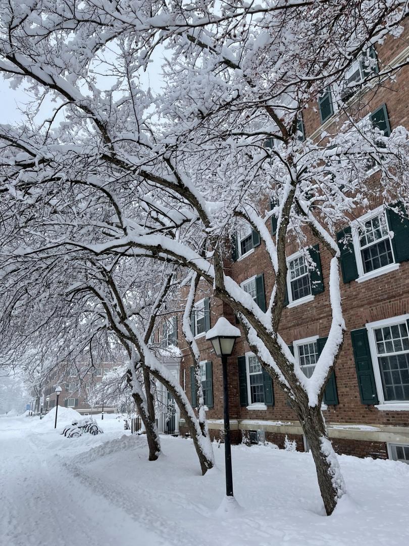 sydney wuu snowy tree
