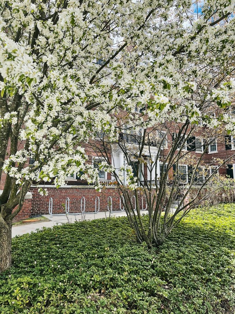 sydney wuu spring flowers