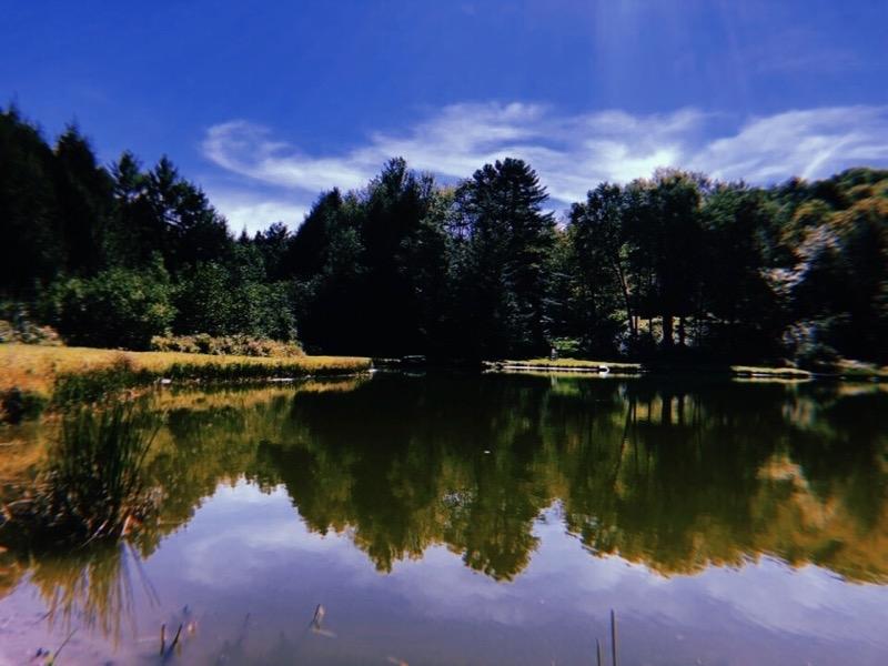 tsp reunion pond