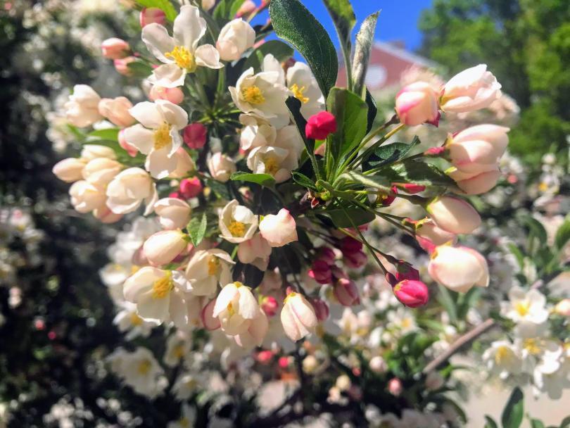 Dartmouth Flowers