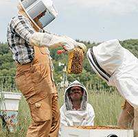 A photo of students checking the bees at the Organic Farm