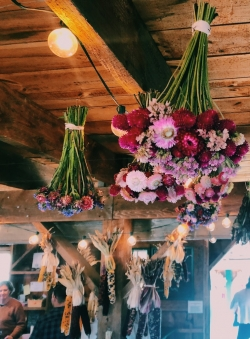 A bouquet of dried flowers hanging from a wooden ceiling.