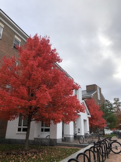 Trees in fall near McLaughlin