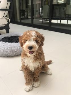 Didi the Puppy