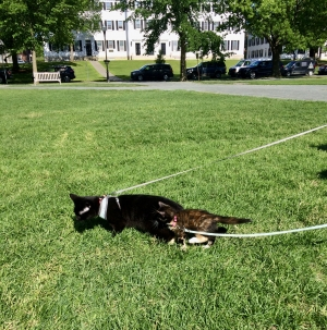 Cats on the Green