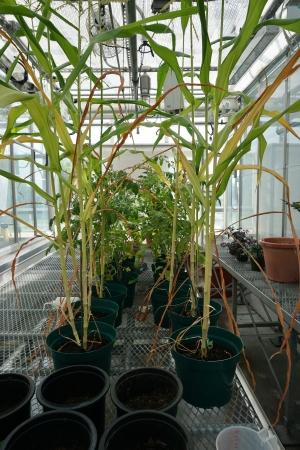 DHE Plants
