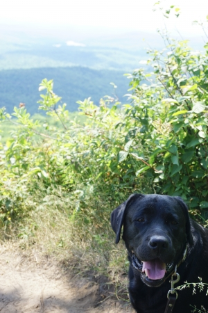 Dog at Holts Ledge