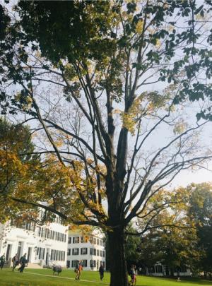 Tree and Dartmouth Hall