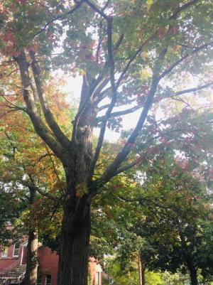 Tree Beside Bartlett Hall