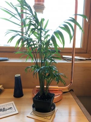 my plant, Bethany