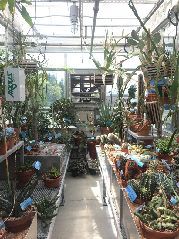Xeric Room of Dartmouth Greenhouse