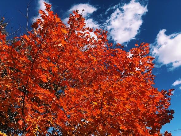 sydney wuu red trees