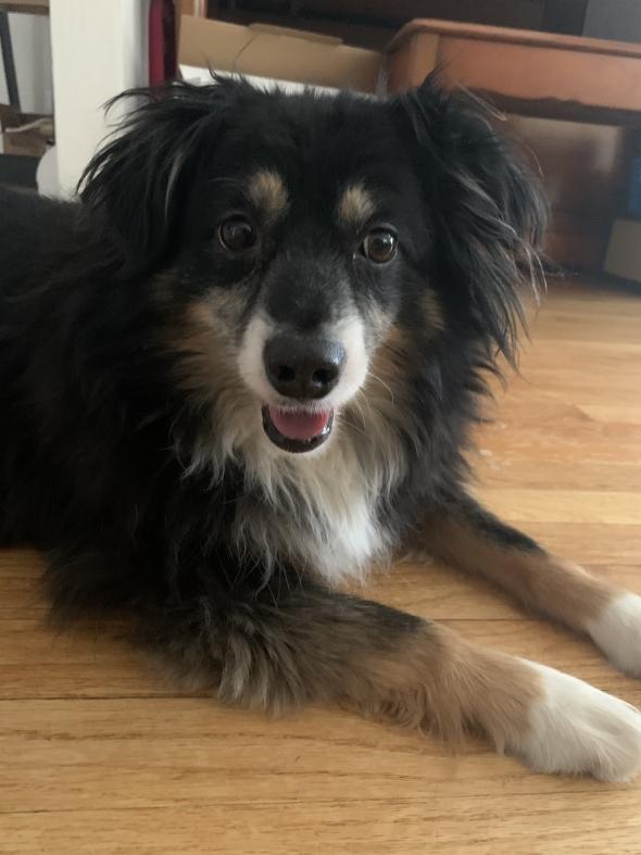 My dog, Aiko!