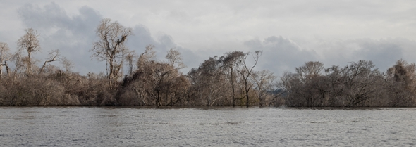 Trees decay on the banks of the Xingu.