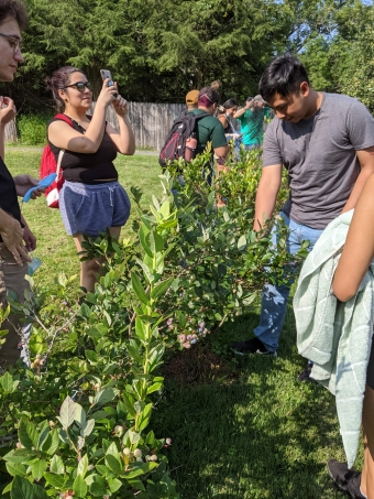 Picking cherry tomatoes and blueberries during FYSEP!